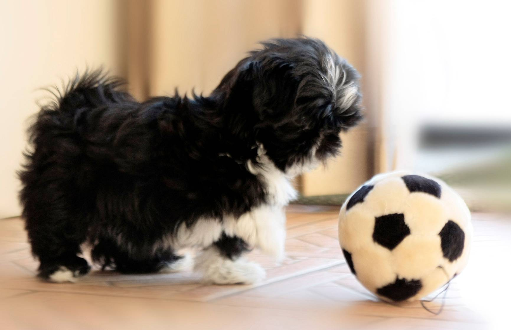 Dog Food For Puppy Shih Tzu