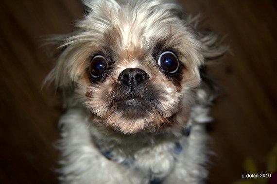 Big Pretty Eyes 171 Akiva The Dog Blog
